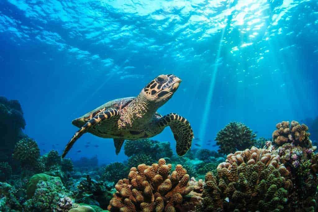 Cebu Tour Pescador Island Turtle Encounter