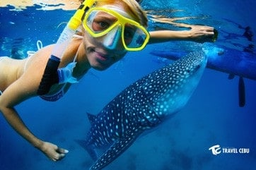 cebu tour whale shark