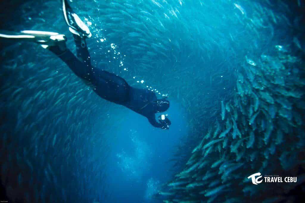 pescador island with sardines