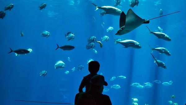 cebu ocean park spot